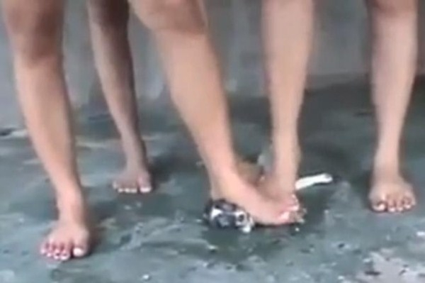 Ba cô gái trẻ giẫm chó con đến chết