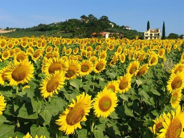 Đắm mình trong anhững thiên đường hoa đẹp nhất thế giới