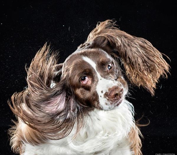 Hài hước bộ ảnh những chú chó lúc lắc