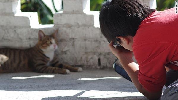 Top 5 điểm đến mà hội yêu mèo không nên bỏ lỡ