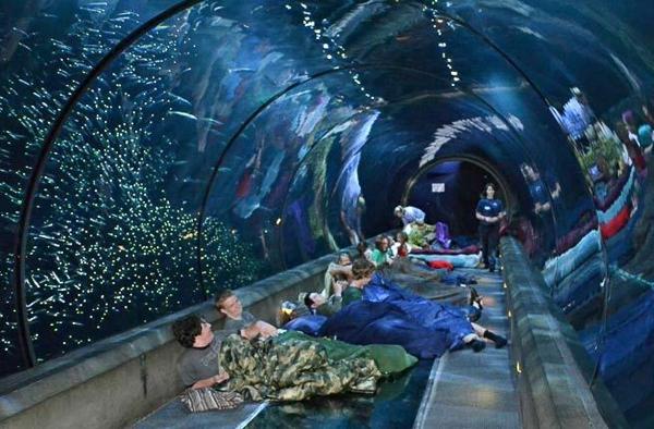 9 công trình dưới nước siêu độc đáo