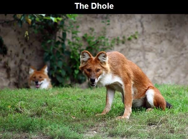 10 loài động vật kỳ lạ nhất trên thế giới