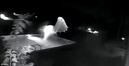 Vật thể lạ xuất hiện gần hồ bơi