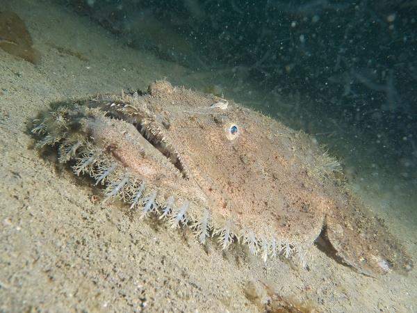 Hoảng hồn với bề ngoài kì dị của các sinh vật biển trước khi chế biến