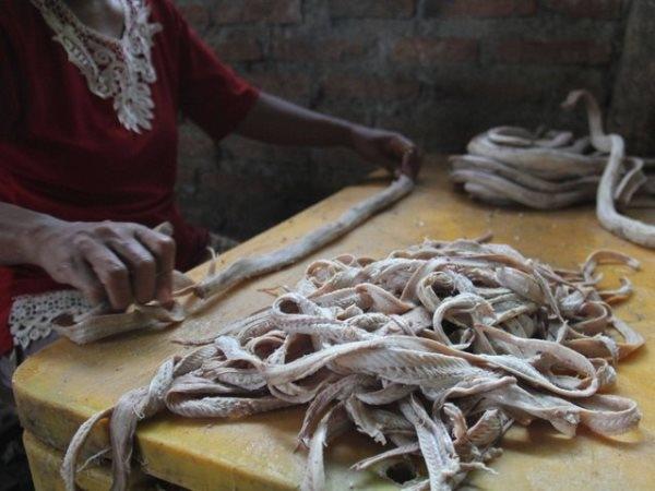 Công việc lột da, xẻ thịt rắn này tưởng chừng chỉ có đàn ông mới dám làm, nhưng tại đây vẫn có các công nhân là phụ nữ.