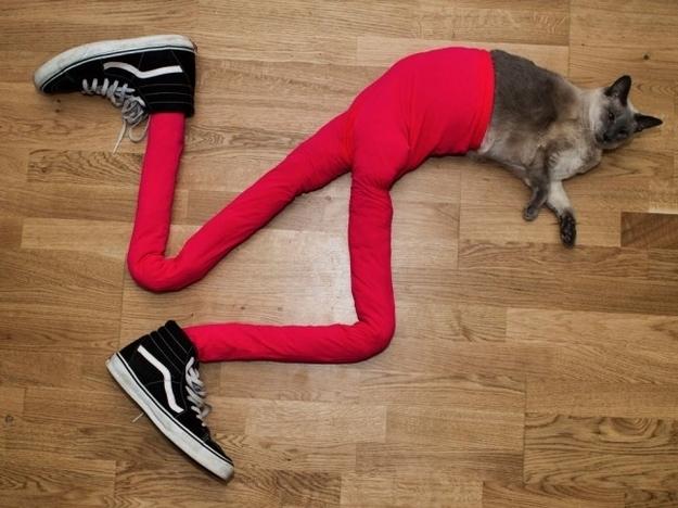 29 vấn đề thời trang chỉ những cô nàng nấm lùn mới gặp phải