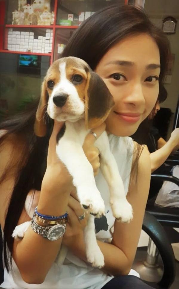 """Ngô Thanh Vân đang lo lắng cho chú chó mới được đưa vào gia đình của mình. Với những chia sẻ và góp ý của khán giả để Ngô Thanh Vân tìm ra cách tốt nhất để chăm sóc chú chó: """"2 tháng Beagle, tên Bi.Em mới về hôm qua.Hú nguyên đêm.Giờ nên nhốt em lại hay vẫn để em bên ngoài.Ai có kinh nghiệm với Beagle chia sẻ với Vân nhe."""""""