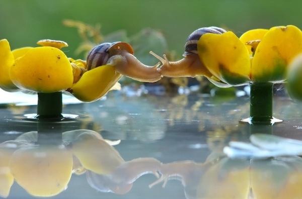 Cận cảnh đời sống thú vị của loài ốc sên siêu tí hon