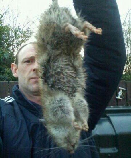 Một trong những con chuột được tìm thấy trong nhà của Se McKendry. (Nguồn: mirror.co.uk)
