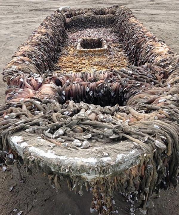 Con tàu bí ẩn này dạt vào bờ trong tình trạng rong rêu và các sinh vật biển bám dày đặc. (Nguồn: nydailynews.com)