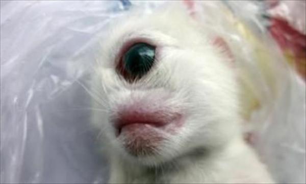 Những chú mèo nổi tiếng nhờ đôi mắt có một không hai của mình