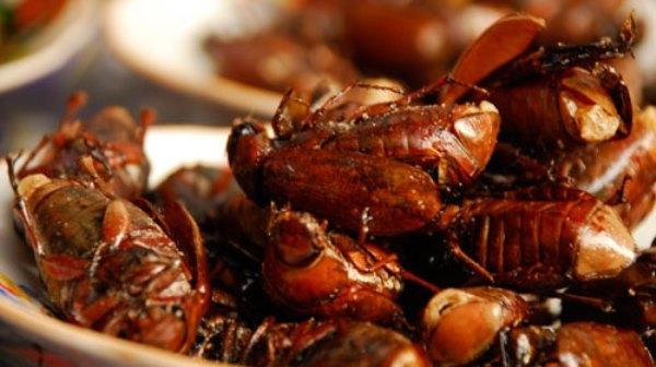 Sửng sốt món ngon đặc sản chế biến từ các loài côn trùng ghớm ghiếc