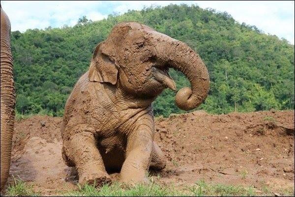 Lạc vào thế giới thú vị của những con vật đáng yêu