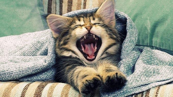 10 mẹo nhỏ giúp bạn thức dậy khỏe khoắn vào buổi sáng