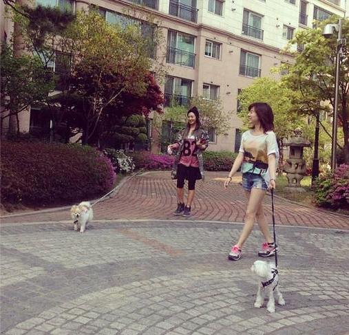Sunny đăng hình cùng Yuri dẫn các chú cún đi dạo