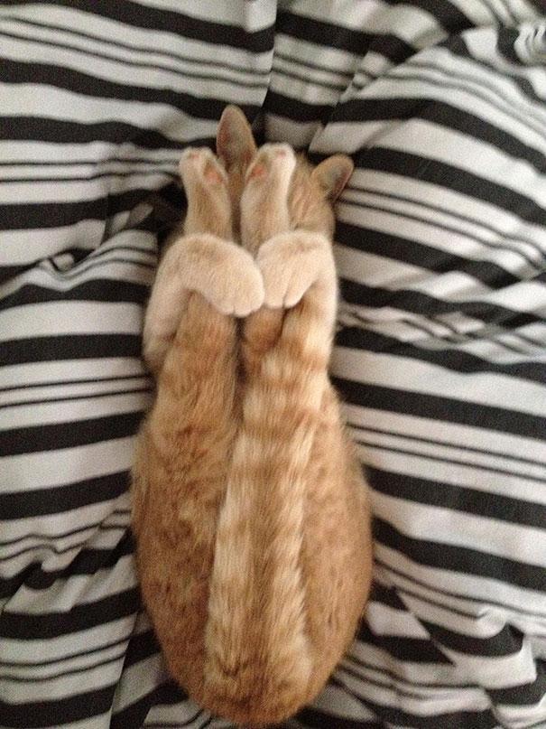 Khi động vật trở thành bậc thầy của yoga