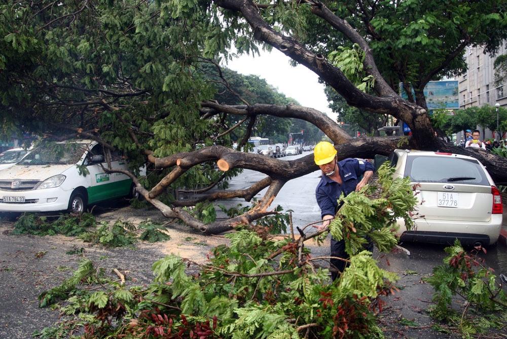 Nhân viên cây xanh cũng đến hiện trường cắt cây, giải tỏa. Gần 18h, mặt đường được trả lại thông thoáng.
