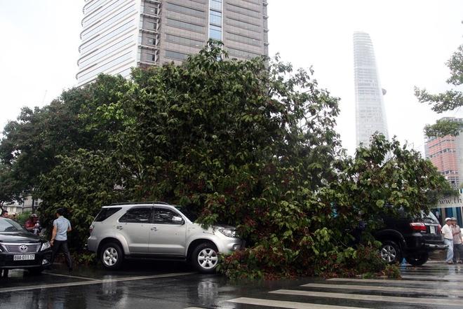 Khoảng 16h30, khi trời đang mưa lớn, gió giật mạnh, cây lim xẹt có đường kính khoảng 50 cm ở góc đường Lê Lợi - Nam Kỳ Khởi Nghĩa bất ngờ bật gốc ngã xuống, đè bẹp ôtô 7 chỗ đậu sát gốc