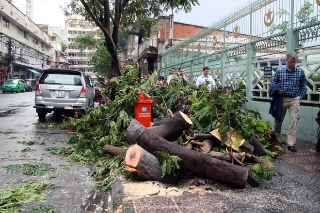 Cùng thời điểm trên, một cây xanh tương tự ở đường Đông Du, Phạm Viết Chánh cũng bật gốc.