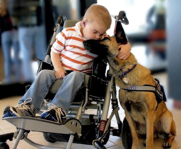14 bức ảnh xúc động về tình cảm và lòng trung thành của động vật (đang làm)