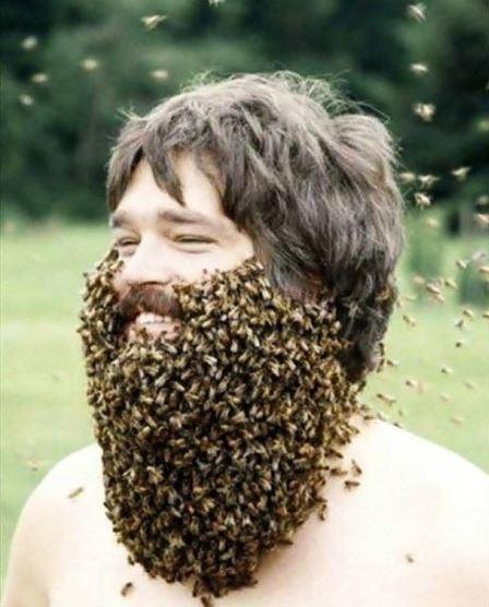 """Có lẽ đã tìm ra """"người bạn thân nhất"""" của loài ong rồi đây"""