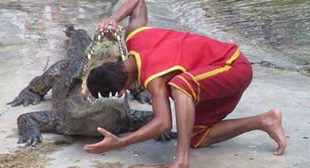 Hi vọng rằng anh ấy vẫn đủ sức để giữ chặt hàm răng của con cá sấu