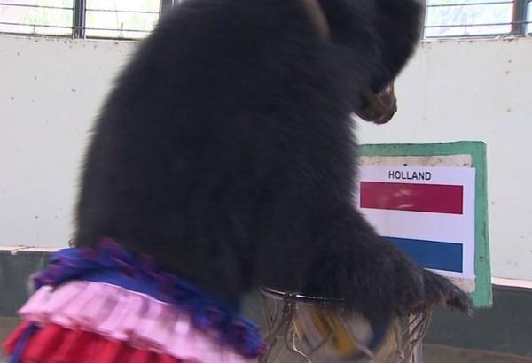 [Bóng Đá] Gấu Misa phán đúng 100% các trận tại World Cup 2014