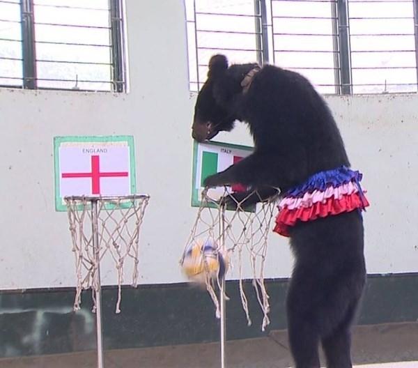 Tiên tri gấu Misa dự đúng kết quả trận Anh-Italia.