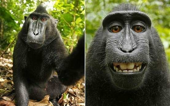 Khi các loài động vật xài camera 360