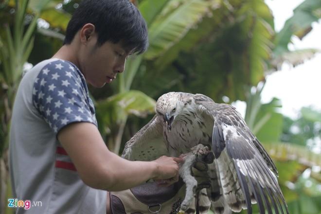 Còn Nguyễn Việt Anh đang nuôi chim đại bàng ưng, cũng 3 năm tuổi. Cả hai con đều có giá ít nhất là 200 triệu/con, có giấy khai sinh rõ ràng. Theo Việt Anh, vì đây là giống đại bàng nhập từ các trang trại của châu Âu, ở Việt Nam không có và được tính thuế nên giá đắt. Trong khi nếu mua ở Việt Nam, giá chỉ khoảng 5-10 triệu/con chim non.