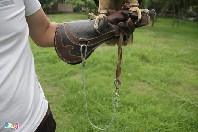 Theo Việt Anh, việc nuôi chim và huấn luyện chim đại bàng cũng không đơn giản, cần nhiều kiến thức, kinh nghiệm nên phải nhập tài liệu từ nước ngoài về nghiên cứu. Cần thiết phải có một chiếc bao tay bằng da bò để giữ cho tay không bị thương khi cho chim đậu trên tay và dễ thao tác khi huấn luyện chim.