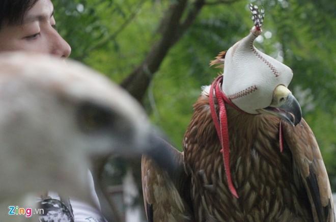 Mỗi con chim đại bàng đều có mũ đội kín mắt để kiểm soát, nhất là những lúc chim hung hăng khi tập săn mồi. Tất cả vật dụng đều do hai người xem mẫu mã từ nước ngoài và thiết kế lại.