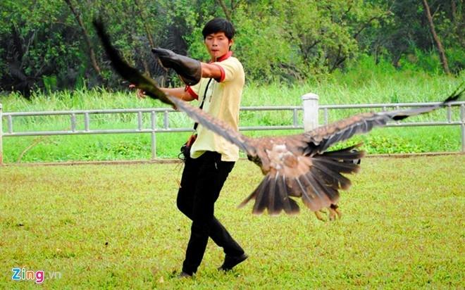 Để đảm bảo việc huấn luyện chim săn mồi hiệu quả thì người nuôi cũng phải quan tâm sít sao đến cân nặng của chim. Mỗi một tuần, hai anh em đều gặp gỡ với bạn bè có cùng sở thích nuôi chim săn mồi để giao lưu, chia sẻ kinh nghiệm.