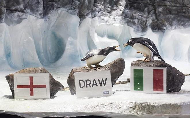 Hai chú chim cánh cụt Gentoo của Viện hải dương học Birmingham, Anh có vẻ mâu thuẫn về việc dự đoán trận Anh - Italy. Một chọn kết quả hòa, còn một chọn Italy thắng.