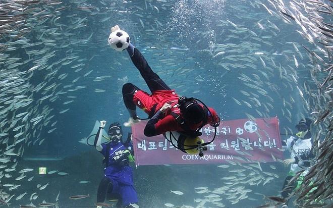 Viện Hải dương học Coex, Seoul, Hàn Quốc tổ chức đá bóng dưới nước với hàng nghìn chú cá sardine nhằm cổ vũ đội tuyển quốc gia tham dự World Cup.