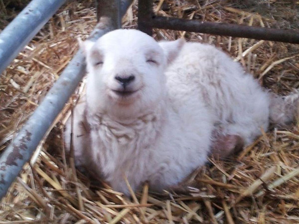 Hạnh phúc trông thật ấm áp!?
