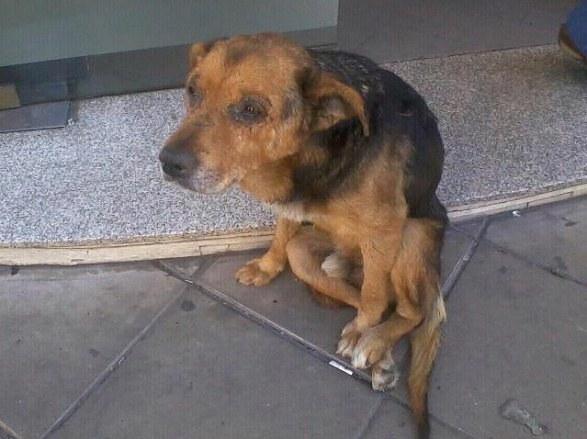 Cảm động hình ảnh các chú chó trước và sau khi được giải cứu