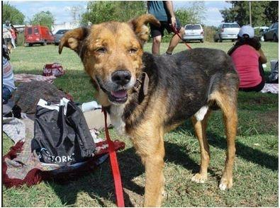 Hình ảnh các chú chó trước và sau khi được giải cứu