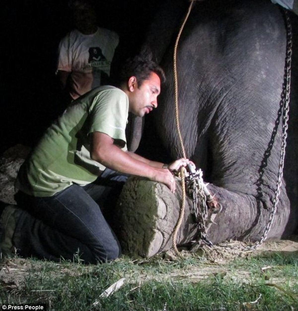 Ngày qua ngày, những cái gai sắt nhọn càng ghim sâu vào da thịt Raju, khi mọi người cố gắng tháo bỏ gông xiềng ra thì những vết thương dù đã lâu năm vẫn liên tục rỉ máu