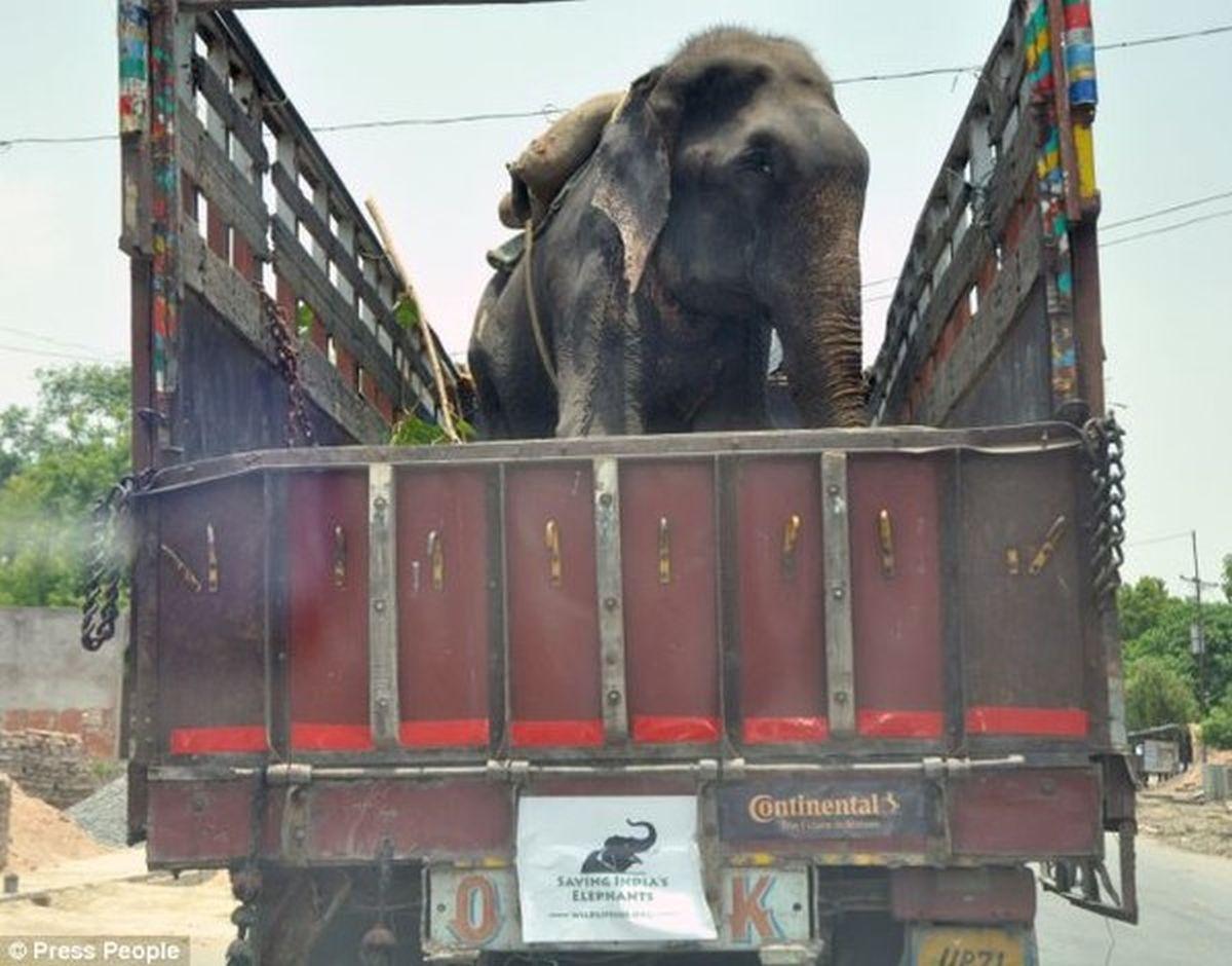 Được giải thoát sau 50 năm, chú voi già bật khóc