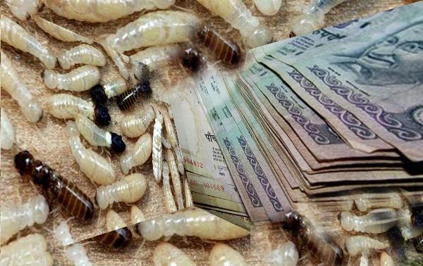"""Những cuộc """"xâm lăng"""" của côn trùng"""