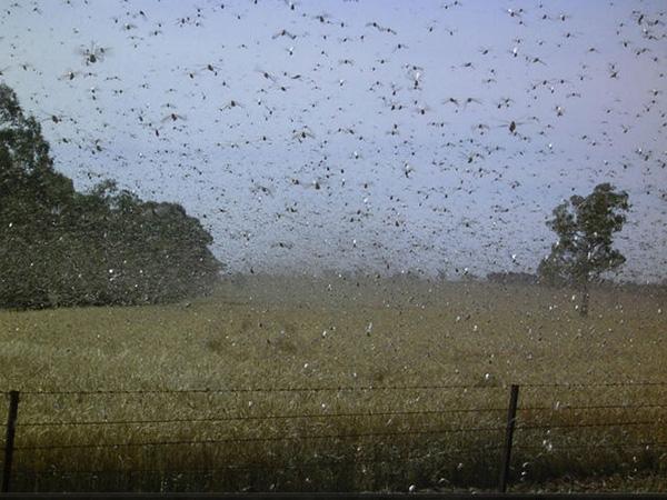 """Đáng sợ những cuộc """"xâm lăng"""" của côn trùng"""