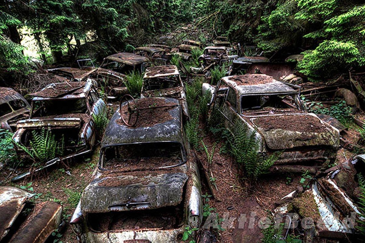 Đã hơn 70 năm trôi qua, bùn đất và lá cây đã dần phủ ngập những chiếc xe cổ đại