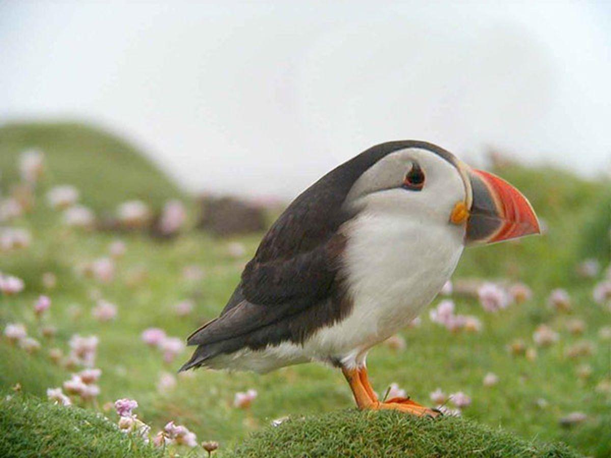 Cổ ngắn khiến chú chim này ú nu ú nần