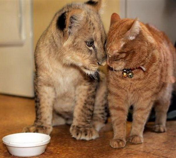 Khi con người sống chung nhà với động vật hoang dã