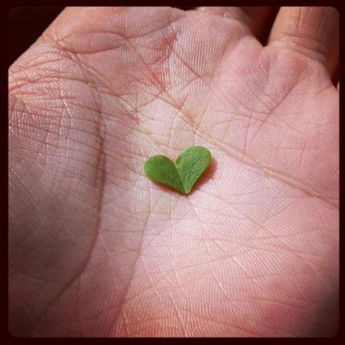 Chanyeol khoe hình trái tim nhỏ bằng lá cây cực đẹp