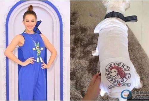 Hình ảnh chú chó Coco Lee chia sẻ.