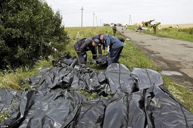 Nhân viên của chính phủ Ukraina tập kết thi thể các nạn nhân trong thảm kịch MH17 bên lề đường gần thành phố Donetsk hôm 19/7
