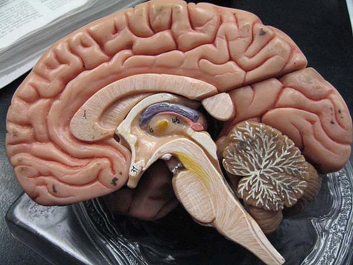 [Bạn biết chưa] Khám phá những điều vô cùng kì diệu về bộ não con người