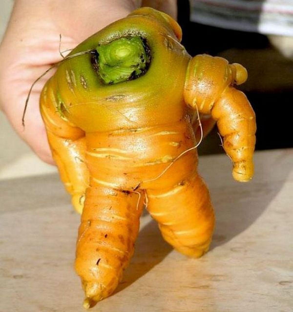 Cà rốt hay siêu Rô bôt